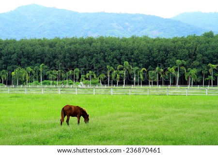 horse farm,country landscape - stock photo
