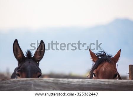Horse farm. Grain added - stock photo