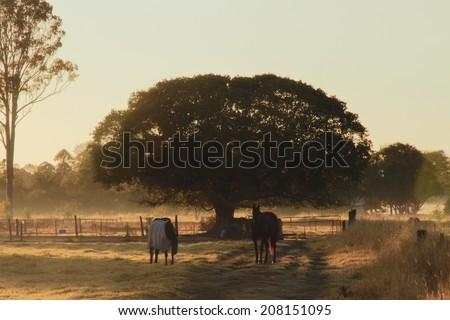 Horse farmland early morning light , queensland australia - stock photo