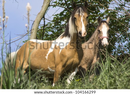 Horse feeding in a green pasture - stock photo