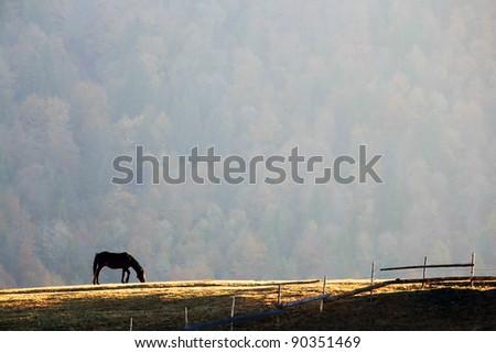 Horse feeding on a meadow - stock photo