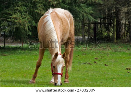 horse feeding on the field - stock photo
