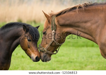 Horse Friendship