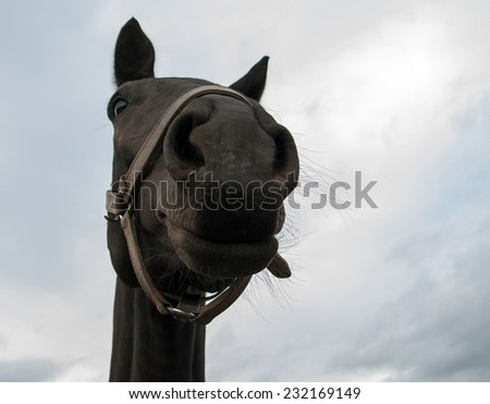 Horse from frog perspective - stock photo