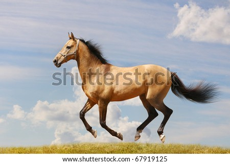 horse gallop - stock photo
