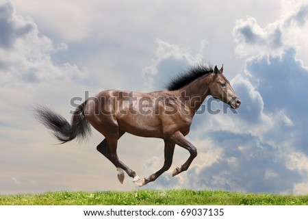 horse gallop - stock photo