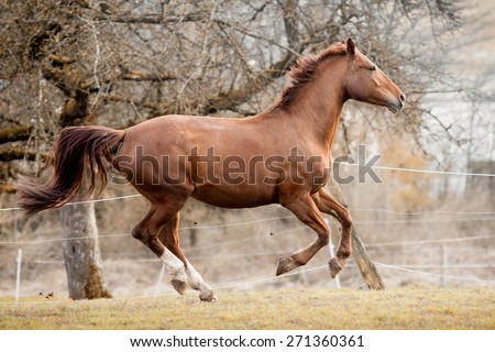 Horse galloping - stock photo