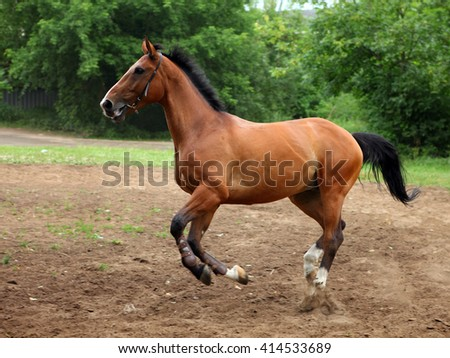 Horse gallops covered paddock in summer - stock photo