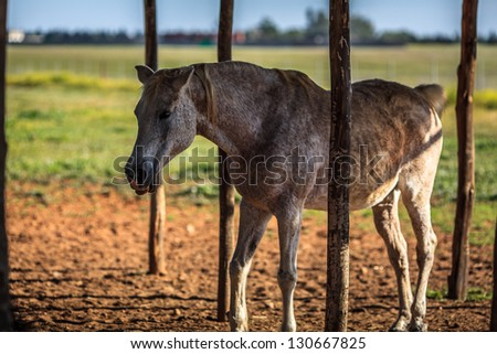 Horse gets it's tongue out - stock photo