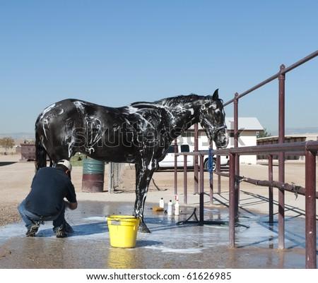 Horse getting a bath - stock photo