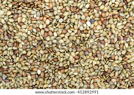 Horse gram or kulthi (Macrotyloma uniflorum)