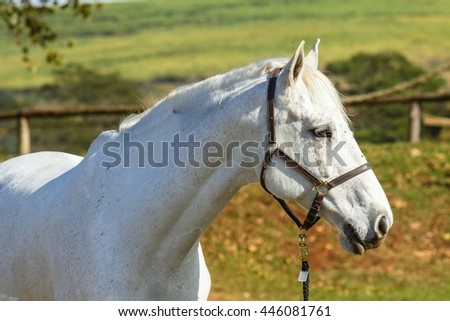 Horse Gray Portrait Horse gray animal closeup head portrait.