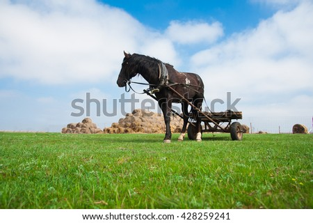 Horse grazes in the harness on the field