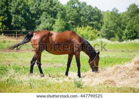 Horse grazing in a haystack in the field on forest background