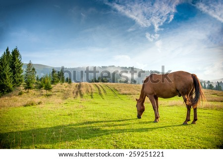 horse grazing in a pasture - stock photo