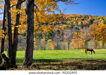 Horse Grazing in Fall Colors