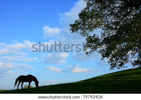 Horse grazing in pasture field, Webster County, West Virginia, USA
