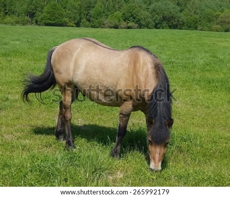 Horse grazing in the meadow. - stock photo
