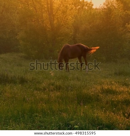 Horse grazing in the meadow. Sunset of a summer day