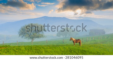 Horse grazing on a meadow in a Ukrainian mountain valley. Early misty morning - stock photo