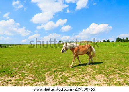 Horse grazing on green meadow on sunny summer day near Krakow, Poland