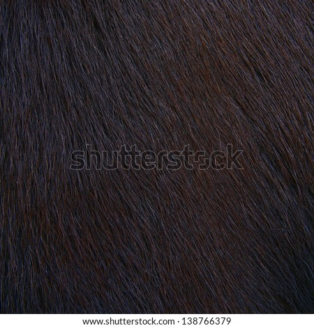 horse hairy texture, fur - stock photo