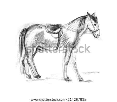 Horse. Hand-drawing in pencil - stock photo