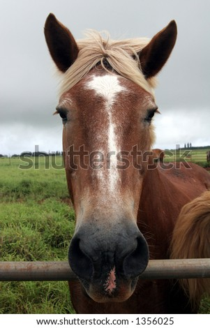 Horse head. - stock photo