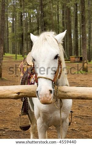 Horse Head at Rancho Nuevo Park - stock photo