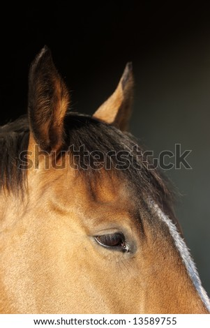 Horse head detail against dark background (with a patch of white on the forehead)