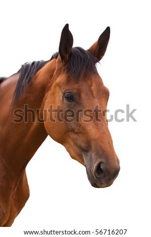 Horse head isolated - stock photo
