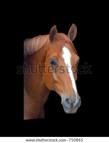 Horse head isolated on a black background - stock photo