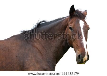 Horse head isolated on white - stock photo