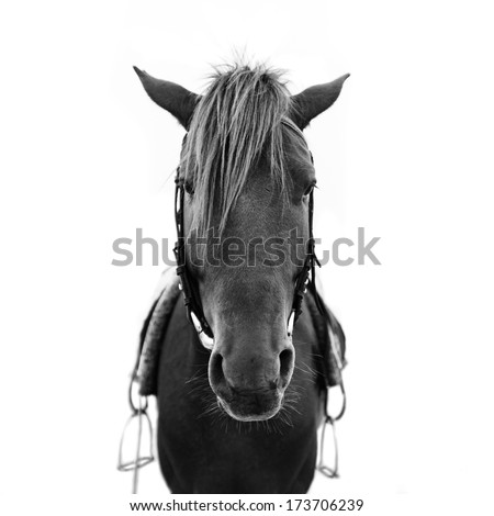 Horse head of brown horse - stock photo