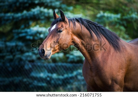 Horse head on green fir-tree - stock photo