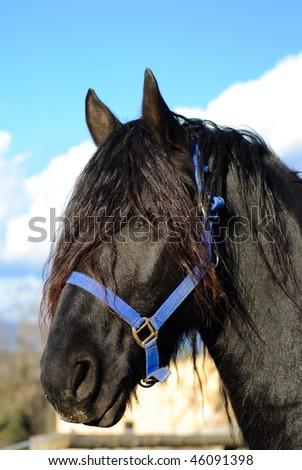 Horse head portrait. - stock photo