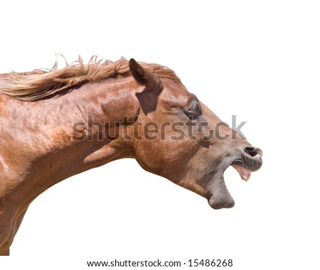 Horse head with mouth open wide isolated on white - stock photo