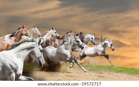 horse herd in sunset - stock photo