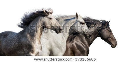Horse herd portrait run gallop isolated on white background - stock photo