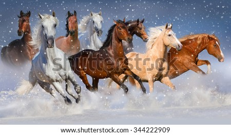 Horse herd run fast in winter snow field - stock photo