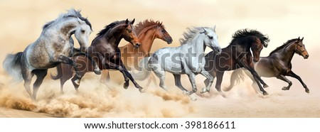 Horse herd run in clouds of dust - stock photo