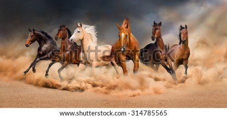 Horse herd run in desert sand storm against dramatic sky - stock photo
