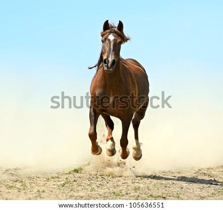 Horse hurrying at a gallop - stock photo