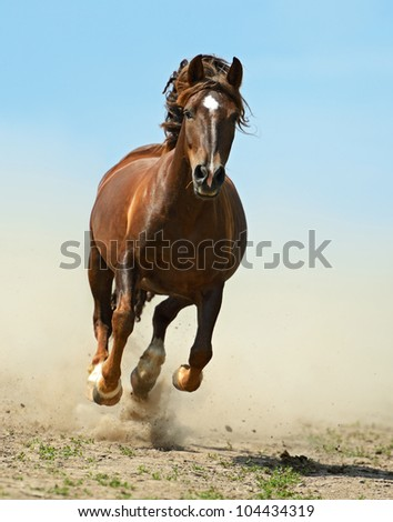 Horse hurrying on a road - stock photo