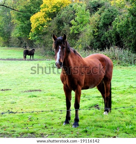 Horse in a field on an early autumn morning