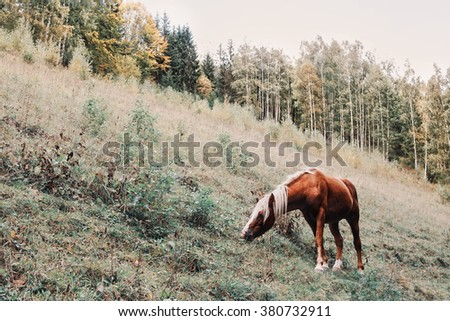 horse in a forest, in the mountains. Selective focus on the horse.  Toned photo  - stock photo