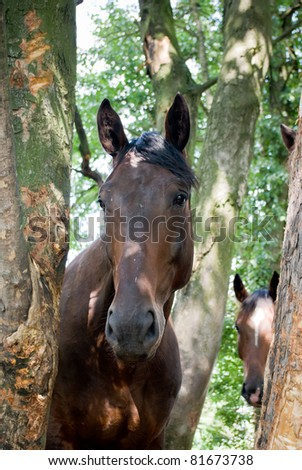 Horse in a green meadow in sunny day, animals series - stock photo