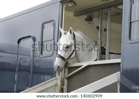 horse in a horse truck - stock photo