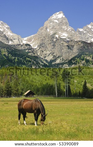 horse in a pastoral paddock at the base of the Tetons - stock photo