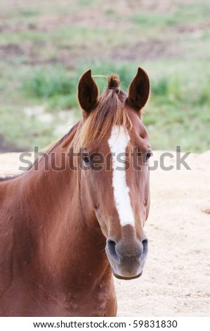 Horse in a pasture - stock photo